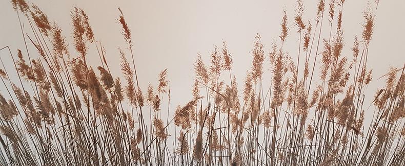planten in wachtruimte van Oefentherapie Langedijk